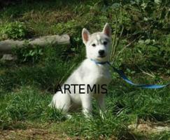 Artemis und Akakamaru suchen noch ein passendes Zuhause!