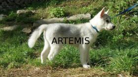 Foto 2 Artemis und Akakamaru suchen noch ein passendes Zuhause!