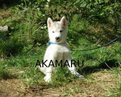 Foto 3 Artemis und Akakamaru suchen noch ein passendes Zuhause!