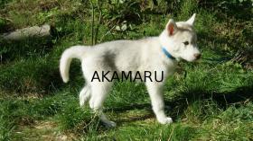 Foto 4 Artemis und Akakamaru suchen noch ein passendes Zuhause!
