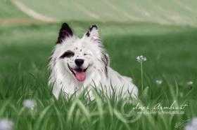 Atelier Schneepfote - digitale Tierportraits