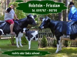 Foto 5 Aufsitzen auf Deko Pferd bzw Deko Kuh ….