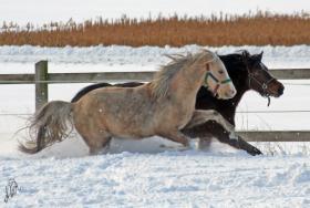Foto 2 Aufzuchtplatz für 2 Hengstfohlen Pony oder Kleinpferd