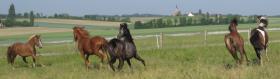 Foto 5 Aufzuchtplatz für 2 Hengstfohlen Pony oder Kleinpferd