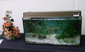 Aus Platzgründen gebrauchtes 150L Aquarium zu verkaufen.