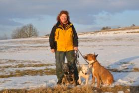 Foto 2 Australian Cattle Dog Welpen - VDH