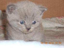 Kätzcken 5