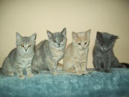 BKH-Katzenbabys