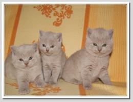 Foto 14 BKH Kitten