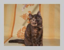 Foto 19 BKH Kitten