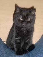 Alana (Katze)