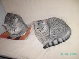 <BKH-Wyskas Katze sucht Schmuseplatz