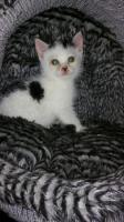 Babykatze Tommy
