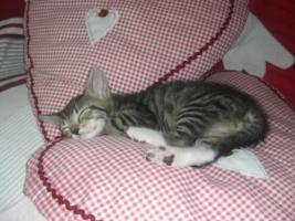 Foto 2 Babykatzen sofort zu vermitteln :-)