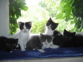 Babys, Katzenkinder u. erwachsene Kätzchen