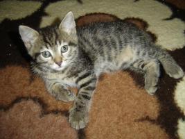 Foto 5 Babys, Katzenkinder u. erwachsene Kätzchen