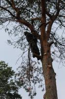 Baum-Notdienst, Sturm-Schadensbeseitigung, Gefahrenbaum-Fällung in Bad Belzig und Umgebung