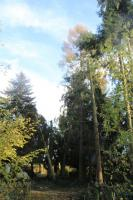 Foto 2 Baum-Notdienst, Sturm-Schadensbeseitigung, Gefahrenbaum-Fällung in Bad Belzig und Umgebung