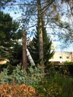 Foto 4 Baum-Notdienst, Sturm-Schadensbeseitigung, Gefahrenbaum-Fällung in Bad Belzig und Umgebung