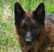 Foto 5 Bekommt Rex ( 8 Jahre ) noch einmal eine Chance?