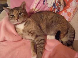 Bengalmischling - Katze gegen Schutzgebühr