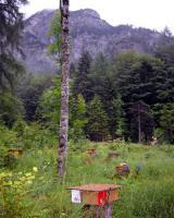 Foto 2 Bienen Leistungsstarke Carnica Reinzuchtkönigin