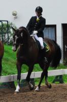 Foto 2 Biete Reitbeteiligung auf Holsteiner Wallach
