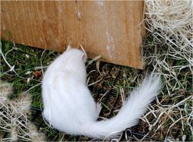 Foto 2 Bildschöne zahme Hörnchen zum verlieben