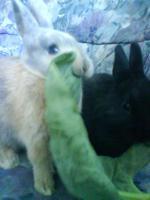 Foto 3 Blacky und Jacky suchen neues zuhause