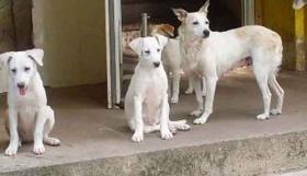 Foto 3 Blanka und Erna, geb. am 30.4.2010,