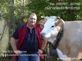 Blickfang für Ihr Geschäft … Stückpreis 1049,00 € kostet bei uns diese Deko Kuh lebensgross mit der Kuhschelle und Kuhschellenriemen inkl. Lieferung / DE