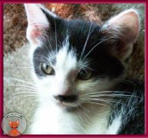 Blini: ein süßes, pfiffiges Katzenbaby