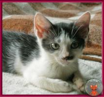 Foto 3 Blini: ein süßes, pfiffiges Katzenbaby