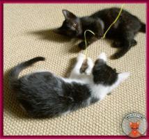 Foto 5 Blini: ein süßes, pfiffiges Katzenbaby