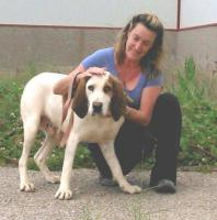 Foto 9 Bluthund Mix MEGA sucht ein Zuhause oder PS