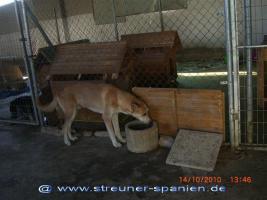 Foto 4 Bono - warum will mich keiner? (Tierschutzhund)
