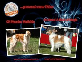 Borzoi - Russian wolfhound breed kennel Forget Valley