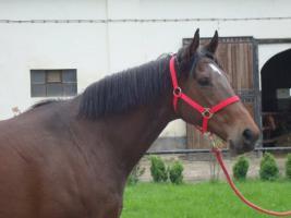 Brave Stute!! Freizeit- und Zuchtpferd!! GÜNSTIG!!
