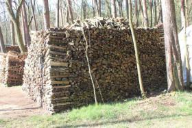 Foto 3 Brennholz, 50cm Länge gemischt; 42,5m³ Haufen