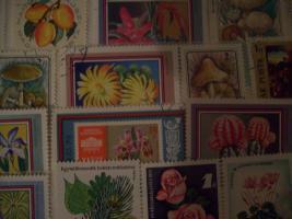 Foto 11 Briefmarkensammlung