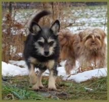 Brillantina weiblich 5 Jahre 32 cm 6 kg Terrier-Mix kastriert gechipt