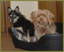 Foto 3 Brillantina weiblich 5 Jahre 32 cm 6 kg Terrier-Mix kastriert gechipt