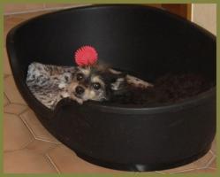 Foto 8 Brillantina weiblich 5 Jahre 32 cm 6 kg Terrier-Mix kastriert gechipt
