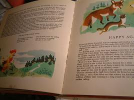 Foto 2 ''Bruin Furryball in his forest home'' ein Kinderbuch.