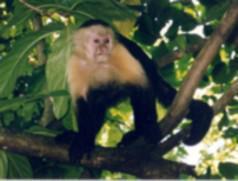 Foto 4 COSTA RICA LIVE !