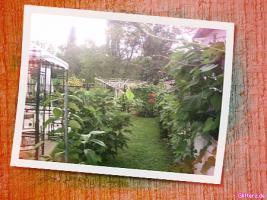 Foto 10 Cafe/Bistro incl. hochwert. Inventar + Wohnung(möbiliert)