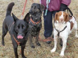Foto 4 Chester, Schäferhundmischling