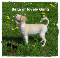Foto 5 Chihuahua Hündin creme-weiß 17 Wochen sucht liebevolles zu Hause!
