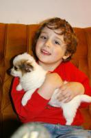 Foto 3 Chihuahua - LH Hündin mit FCI Papieren