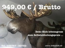 DEKO ELCH LEBENSGROSS FÜR  949,00 € ....